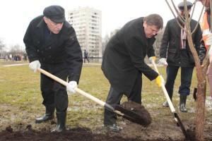 Губернатор Санкт-Петербурга Георгий Полтавченко сажает сакуру в Сольном саду