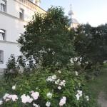 Валаам 2013_ _ 002 розы внутреннего каре