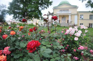 Марьино розы