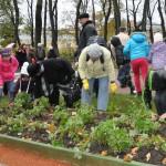 Посадка тюльпанов в Летнем саду 2013 октябрь