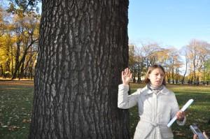 Сарый дуб на Масяном лугу Михайловского сада