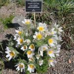 ботанический сад СОН ТРАВА 008
