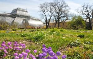 ботанический сад 007