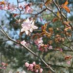 ботанический сад 014_