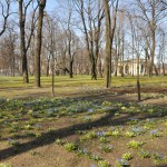 сады русского музея 498_