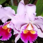 Ботанический Сад DSC_5123