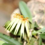 Ботанический Сад DSC_5143