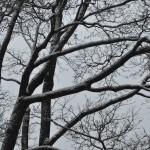 деревья  ЦАРСКОЕ СЕЛО декабрь 2013 148