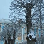 деревья ЦАРСКОЕ СЕЛО декабрь 2013 313