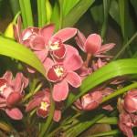 орхидеи 001_