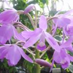 орхидеи 019_
