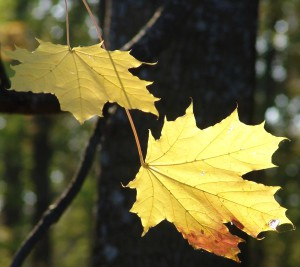 осень Фото Валерия Мухера