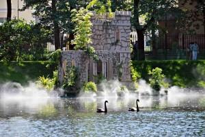 черные лебеди 3_