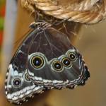 музей бабочек 005
