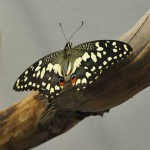 музей бабочек 006_