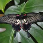 музей бабочек 008_