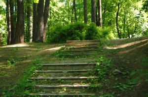 Парк Лесотхнической академии 2 (1)