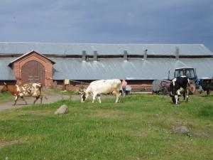 RU_Karelia_Valaam_Farm