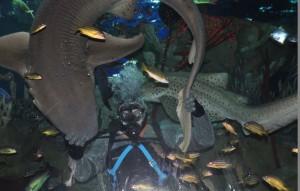 акула - кольцо
