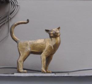 Коты DSC_0086