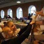 Кошки В.Г.Желтов 4