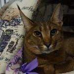 Кошки Фото Желтова В.Г.