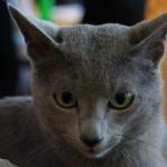 Кошки 6 Фото В.Г. Желтова