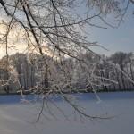 Снегопад Санкт-Петербург 2016 январь Фото Калясиной людмилы DSC_0782
