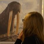 Выставка Дикая природа России Фото Владимира Желтова 2016 февральDSC05415