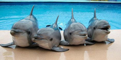 Дельфинчики_