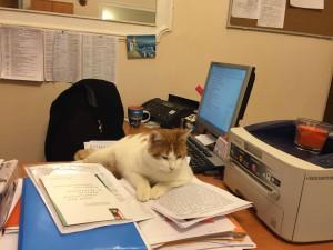 Кошка Анжелина из Капеллы