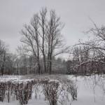 Парк Победы Блокада Фото Калясиной Людмилы DSC_0223