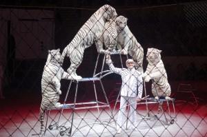 Цирк ЗАПАШНЫХ DSC00009