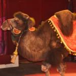 Цирк на Есенина DSC_0873