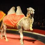 Цирк на Есенина DSC_0881